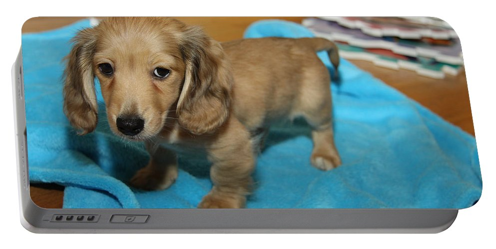 Puppy Portable Battery Charger featuring the photograph Puppy On Blue Blanket by Diana Haronis