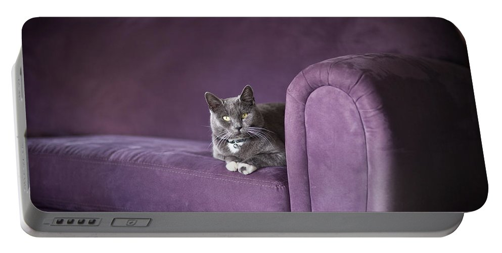 Cat Portable Battery Charger featuring the photograph Purple Resplendent by Mike Reid