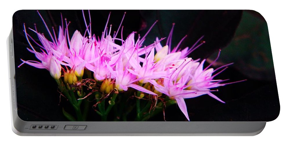 Sedum Portable Battery Charger featuring the photograph Purple Sedum by Chris Berry