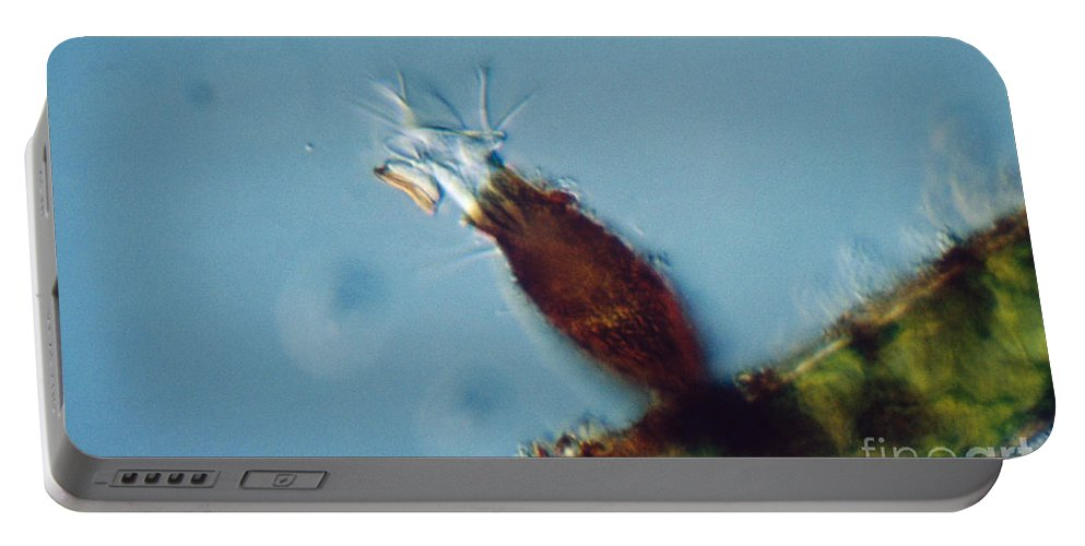 Pyxicola Sp Portable Battery Charger featuring the photograph Pyxicola Sp by M. I. Walker