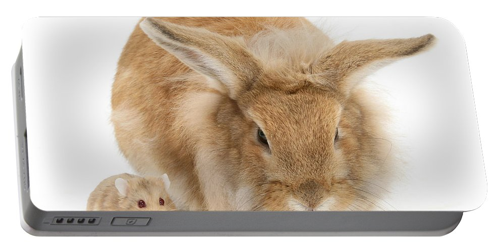 Animal Portable Battery Charger featuring the photograph Rabbit And Dwarf Hamster by Mark Taylor