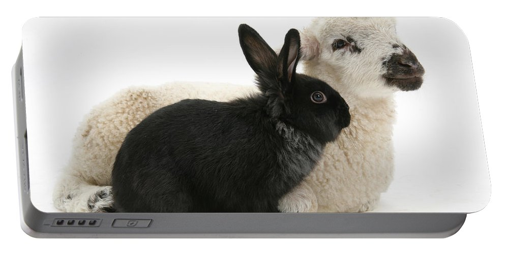 Animal Portable Battery Charger featuring the photograph Rabbit And Lamb by Mark Taylor