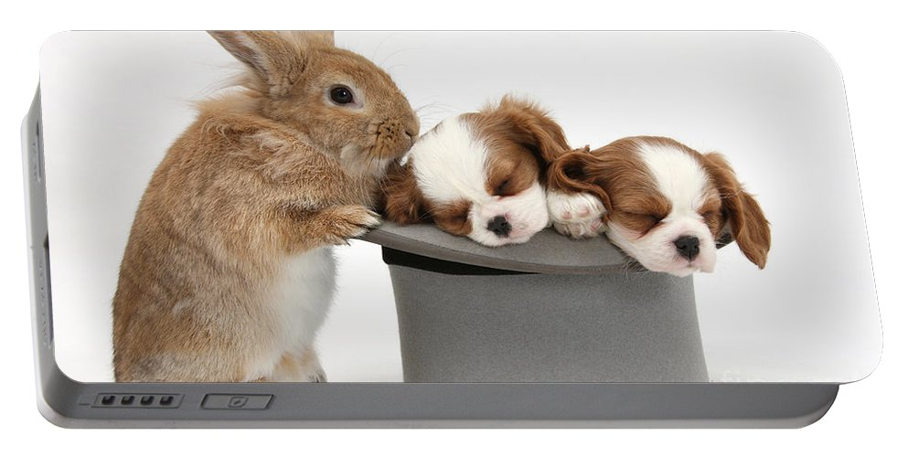Animal Portable Battery Charger featuring the photograph Rabbit And Spaniel Pups by Mark Taylor