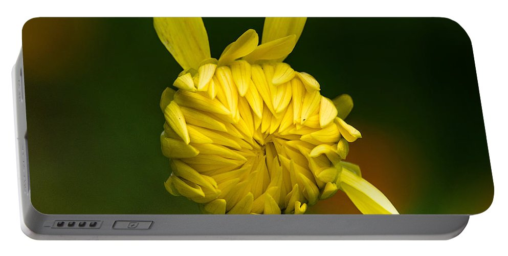 Flower Portable Battery Charger featuring the photograph Rabbit Flower by Greg Nyquist