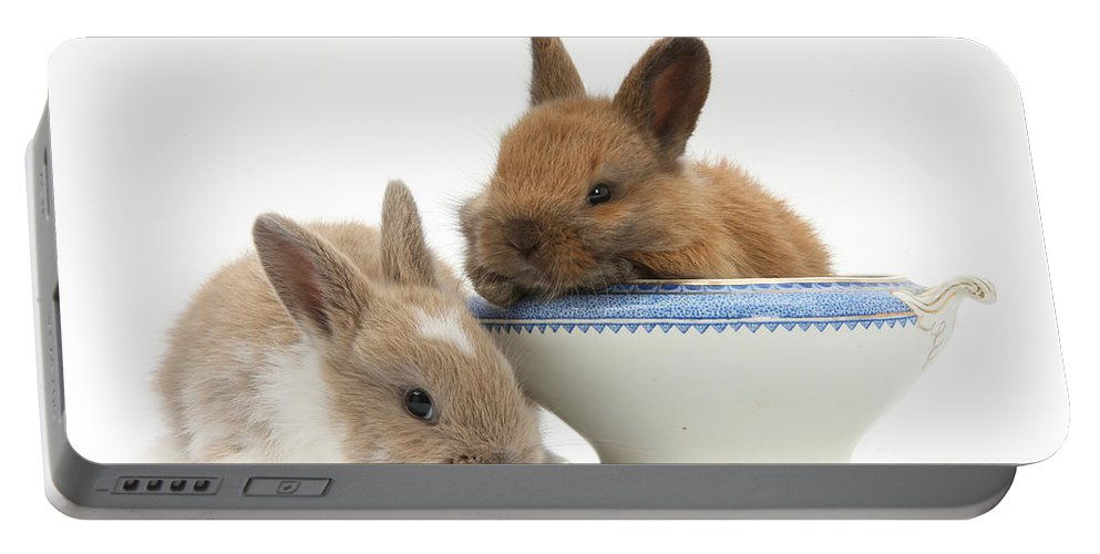 Nature Portable Battery Charger featuring the photograph Rabbits And China Bowl by Mark Taylor