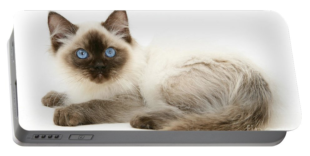Animal Portable Battery Charger featuring the photograph Ragdoll Kitten by Mark Taylor