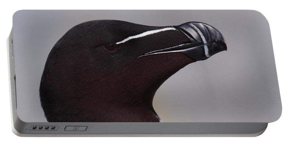 Razorbill Portable Battery Charger featuring the photograph Razorbill Portrait by Bruce J Robinson