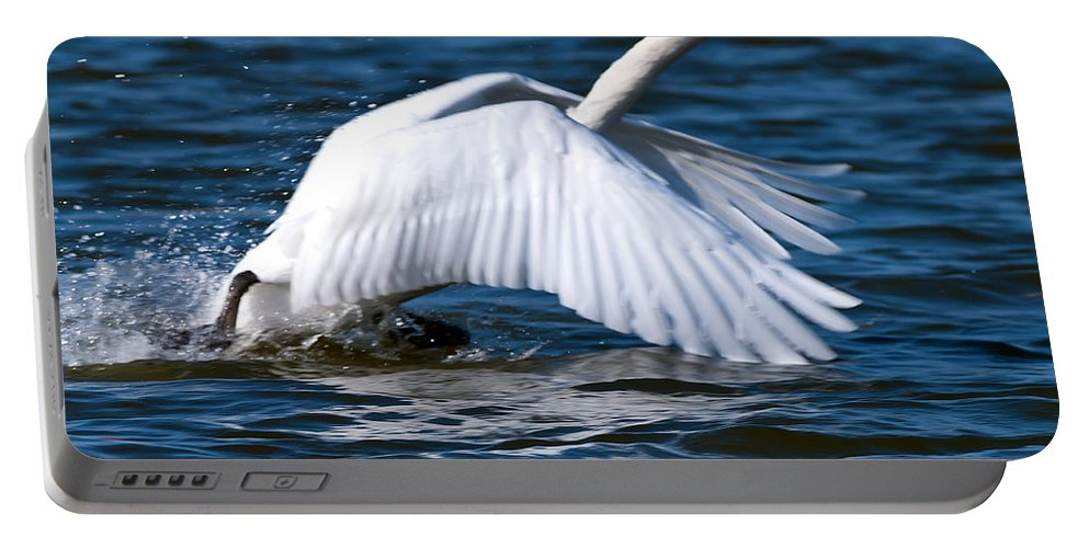 Swan Portable Battery Charger featuring the photograph Ready Set Go by Randall Branham