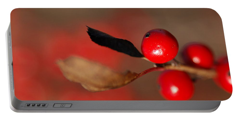 Nature Portable Battery Charger featuring the photograph Red As A Winterberry by Susan Capuano