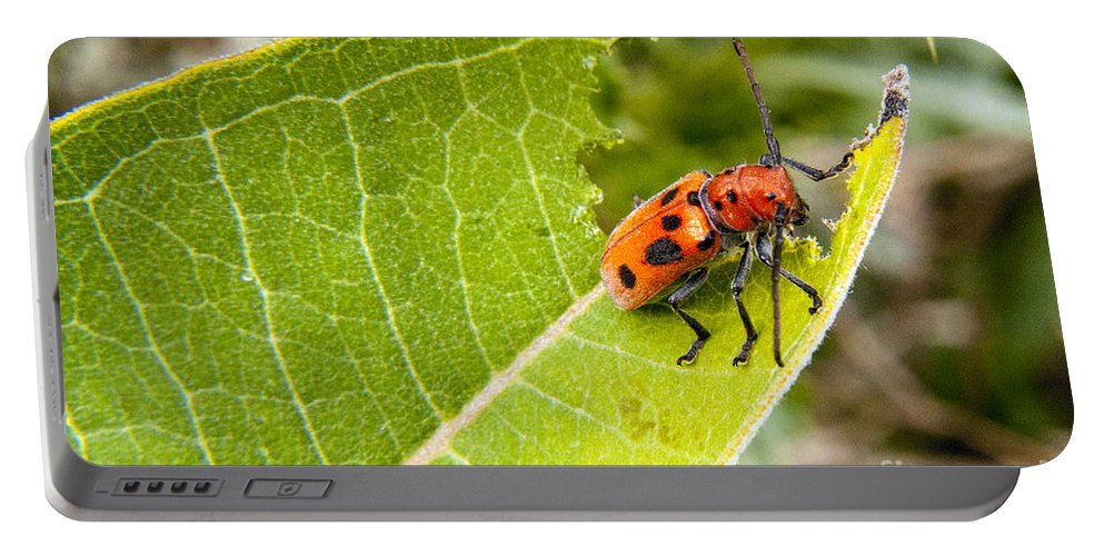 Beetle Portable Battery Charger featuring the photograph Red Beetle Munching by Darleen Stry