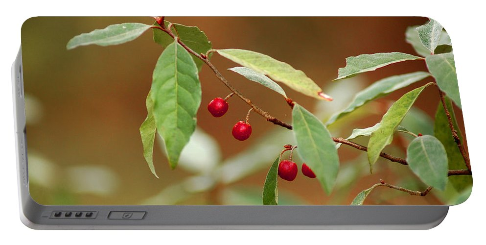 Red Portable Battery Charger featuring the photograph Red Bird Berries Of Fall by LeeAnn McLaneGoetz McLaneGoetzStudioLLCcom