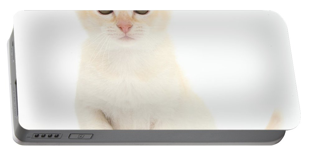 Nature Portable Battery Charger featuring the photograph Red Burmese Kitten by Mark Taylor