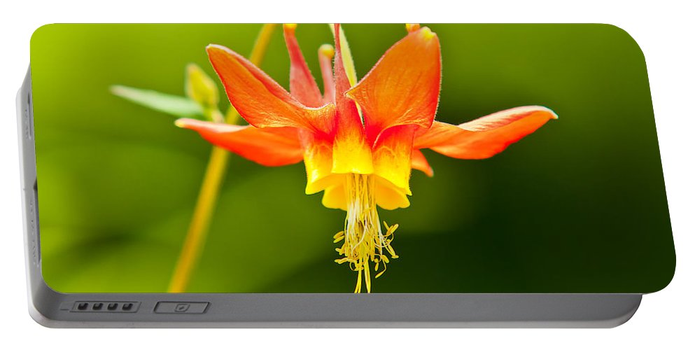 America Portable Battery Charger featuring the photograph Red Columbine by Rich Leighton