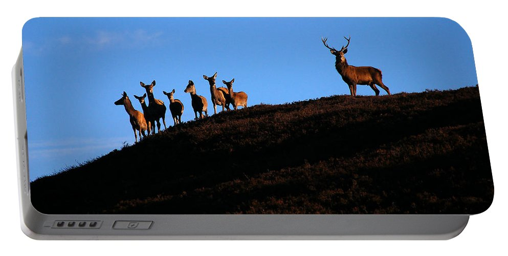 Red Deer Stag Portable Battery Charger featuring the photograph Red Deer Group by Gavin Macrae