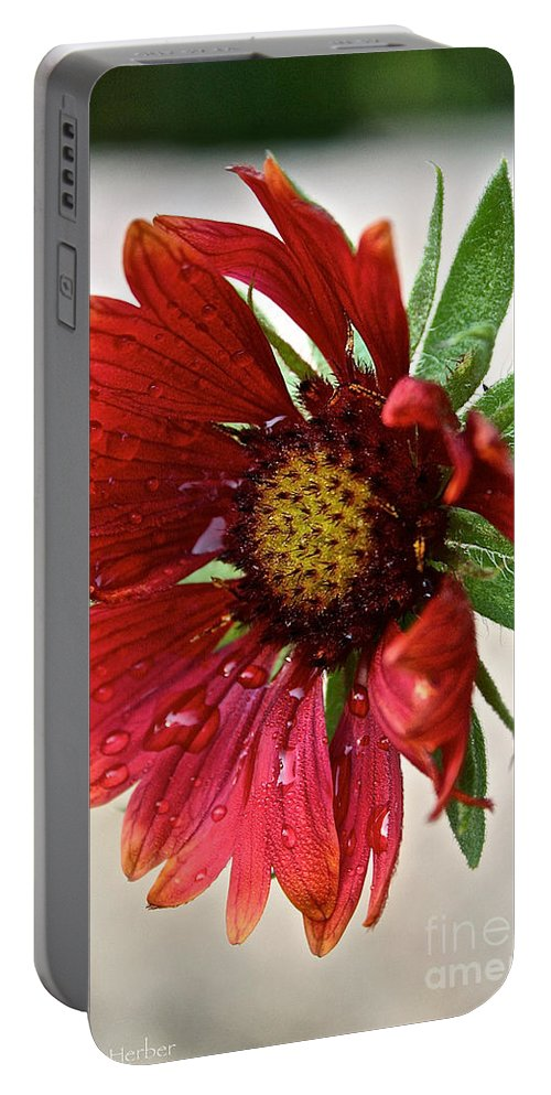 Plant Portable Battery Charger featuring the photograph Red Gaillardia by Susan Herber