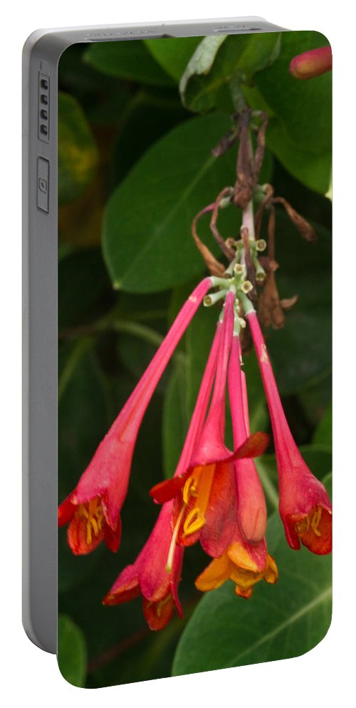 Honeysuckles Portable Battery Charger featuring the photograph Red Honeysuckle Blossoms 1 by Douglas Barnett