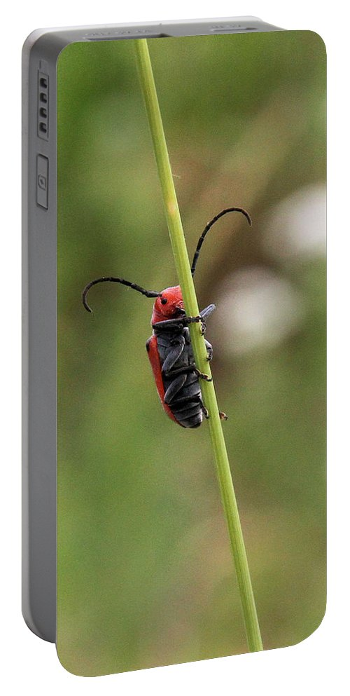 Red Milkweed Beetle Portable Battery Charger featuring the photograph Red Milkweed Beetle by Doris Potter