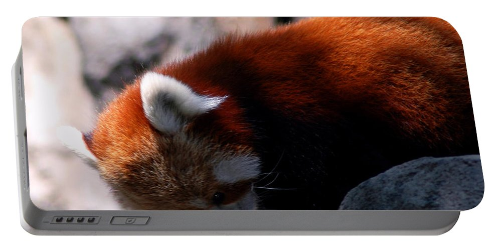 Usa Portable Battery Charger featuring the photograph Red Panda Lost Keys by LeeAnn McLaneGoetz McLaneGoetzStudioLLCcom