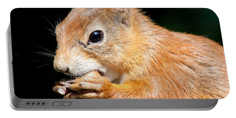 British Wildlife Centre Portable Battery Charger featuring the photograph Red Squirrel by Dawn OConnor