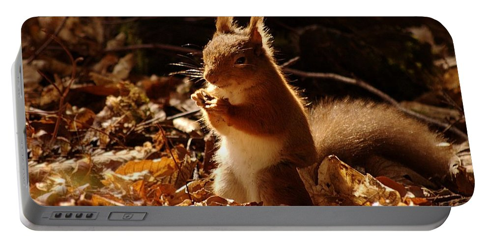 Red Squirrel Portable Battery Charger featuring the photograph Red Squirrel by Gavin Macrae