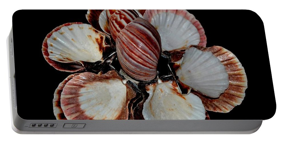 Red Portable Battery Charger featuring the photograph Red-toned Seashells by Maria Urso