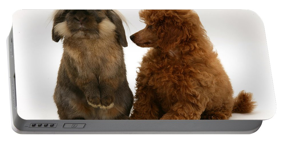 Nature Portable Battery Charger featuring the photograph Red Toy Poodle Pup With A Lionhead by Mark Taylor