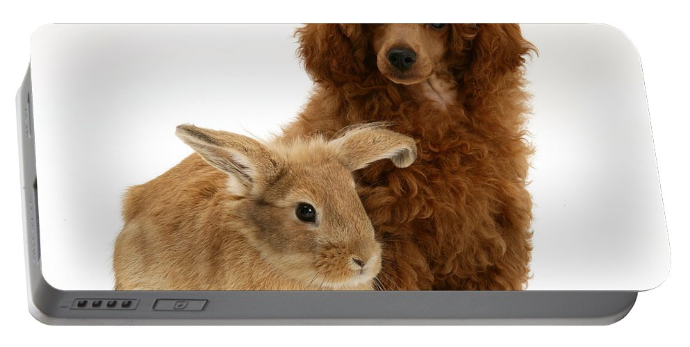 Nature Portable Battery Charger featuring the photograph Red Toy Poodle Pup With Lionhead-cross by Mark Taylor