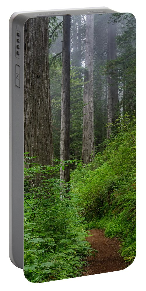 Redwoods Portable Battery Charger featuring the photograph Redwoods Along Ossagon Trail by Greg Nyquist