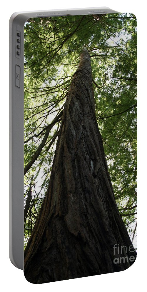 Coast Redwood Portable Battery Charger featuring the photograph Redwoods Sequoia Sempervirens by Ted Kinsman