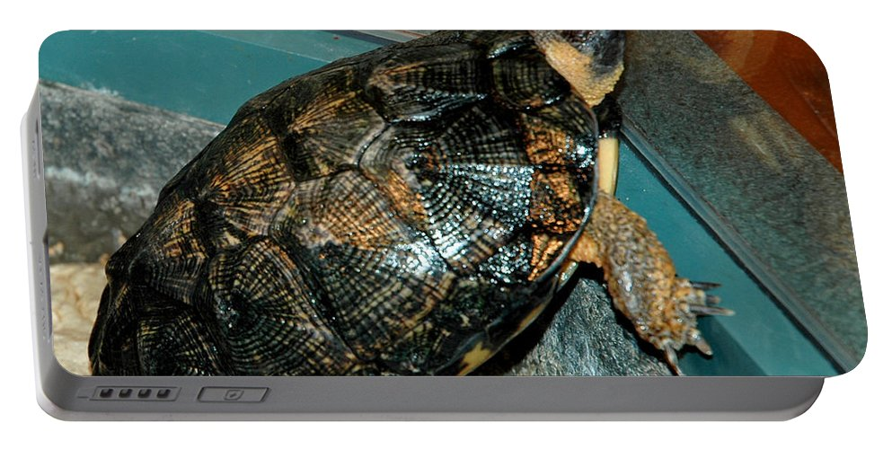 Usa Portable Battery Charger featuring the photograph Reflecting Turtle by LeeAnn McLaneGoetz McLaneGoetzStudioLLCcom