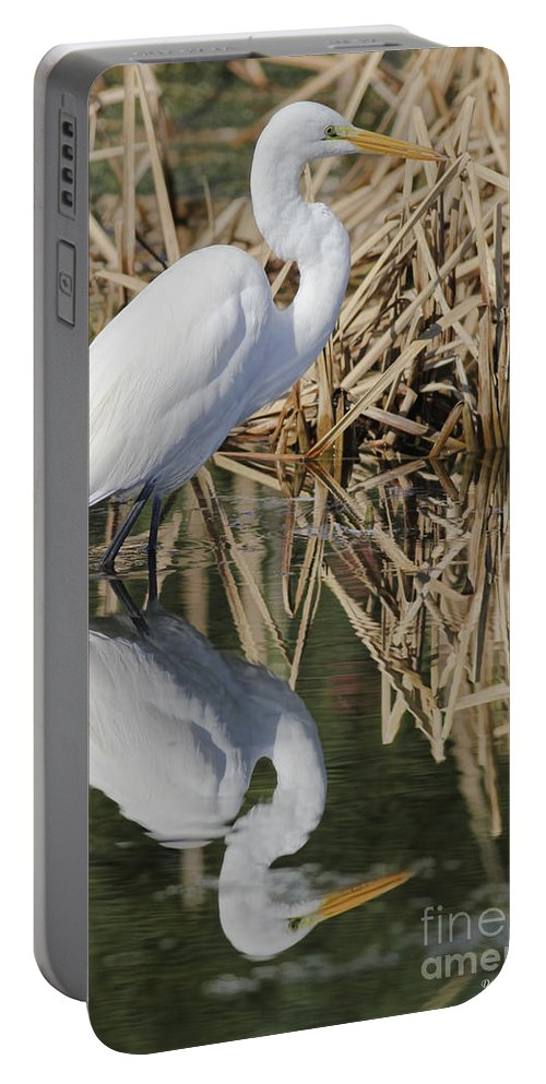 Wildlife Portable Battery Charger featuring the photograph Reflective Day by Deborah Benoit