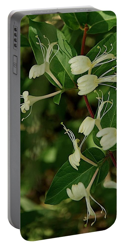 Flower Portable Battery Charger featuring the photograph Rest Stop by Joseph Yarbrough