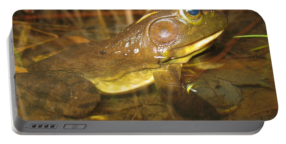 Fauna Portable Battery Charger featuring the photograph Resting Bullfrog by Ted Kinsman