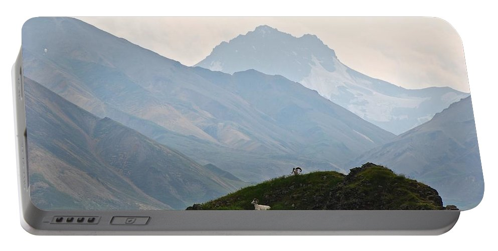 Danali National Park Portable Battery Charger featuring the photograph Resting Dall Sheep by Eric Tressler