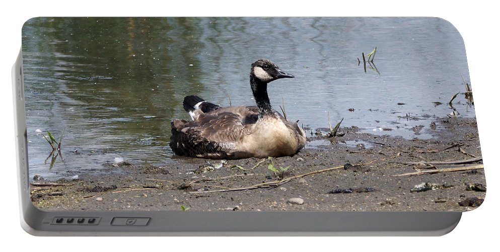 Goose Portable Battery Charger featuring the photograph Resting by Lori Tordsen