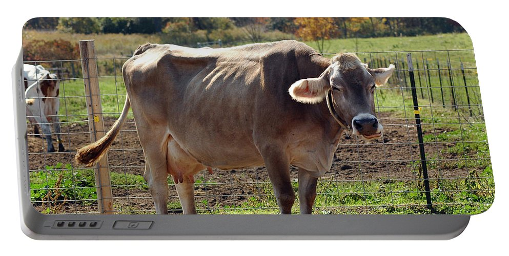Animals Portable Battery Charger featuring the photograph Ribs On A Skinny Cow by LeeAnn McLaneGoetz McLaneGoetzStudioLLCcom
