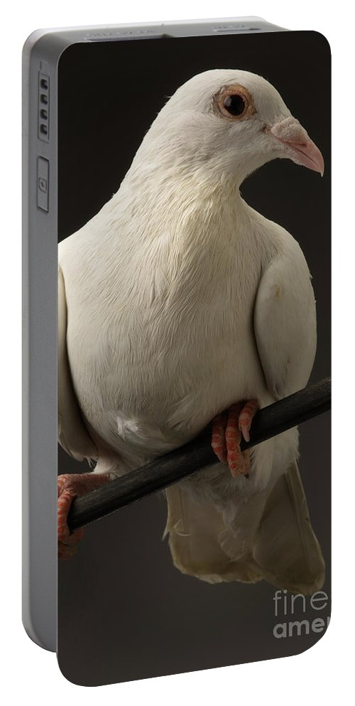 Animal Portable Battery Charger featuring the photograph Ring-necked Dove by Raul Gonzalez Perez