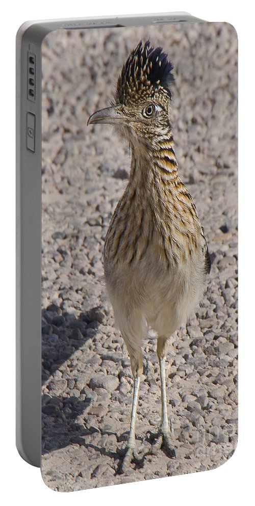 Bird Portable Battery Charger featuring the photograph Road Runner A by Larry White
