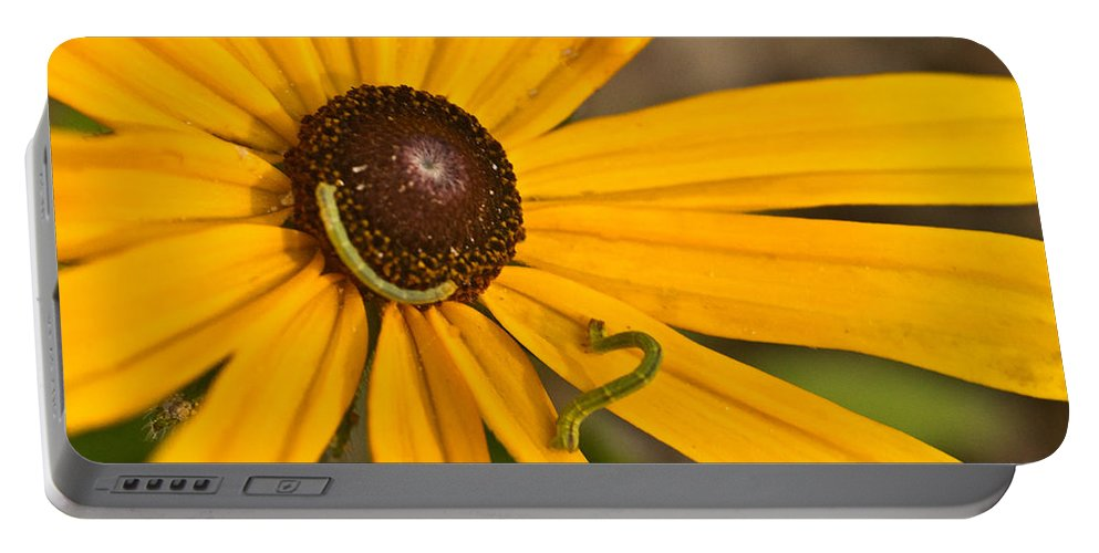 Daisy Portable Battery Charger featuring the photograph Roadside Daisy And Inch Worms by Douglas Barnett