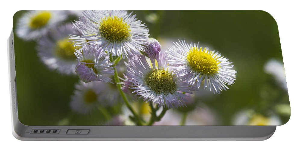 Robins Plantain Portable Battery Charger featuring the photograph Robin's Plantain - Alabama Wildflowers by Kathy Clark