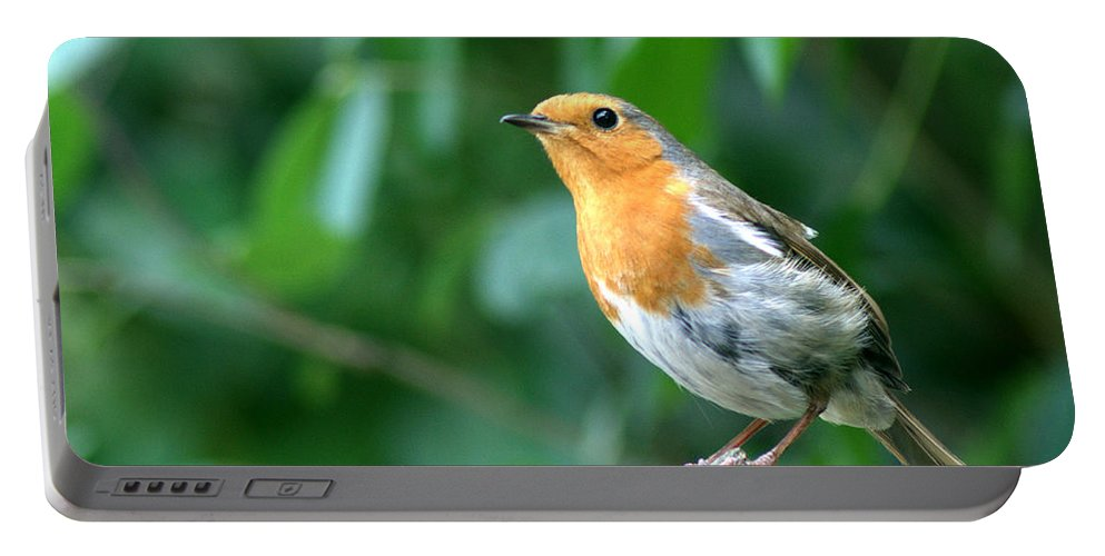 Robin Portable Battery Charger featuring the photograph Robun 2 by Chris Day