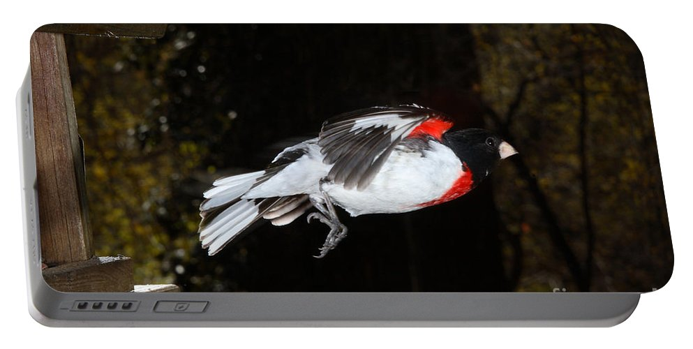 Male Rose-breasted Grosbeak Portable Battery Charger featuring the photograph Rose-breasted Grosbeak by Ted Kinsman
