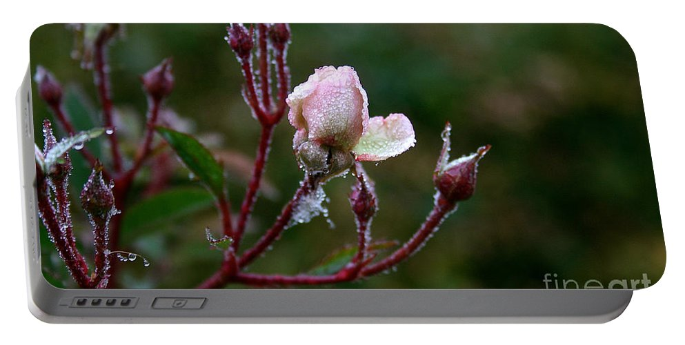 Flower Portable Battery Charger featuring the photograph Rose Candelabra by Susan Herber