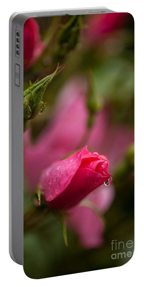 Flower Portable Battery Charger featuring the photograph Rose Drop by Mike Reid