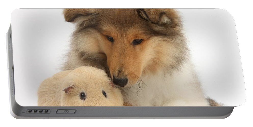 Nature Portable Battery Charger featuring the photograph Rough Collie Pup And Yellow Guinea Pig by Mark Taylor