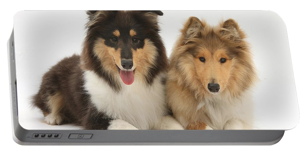 Animal Portable Battery Charger featuring the photograph Rough Collies by Mark Taylor