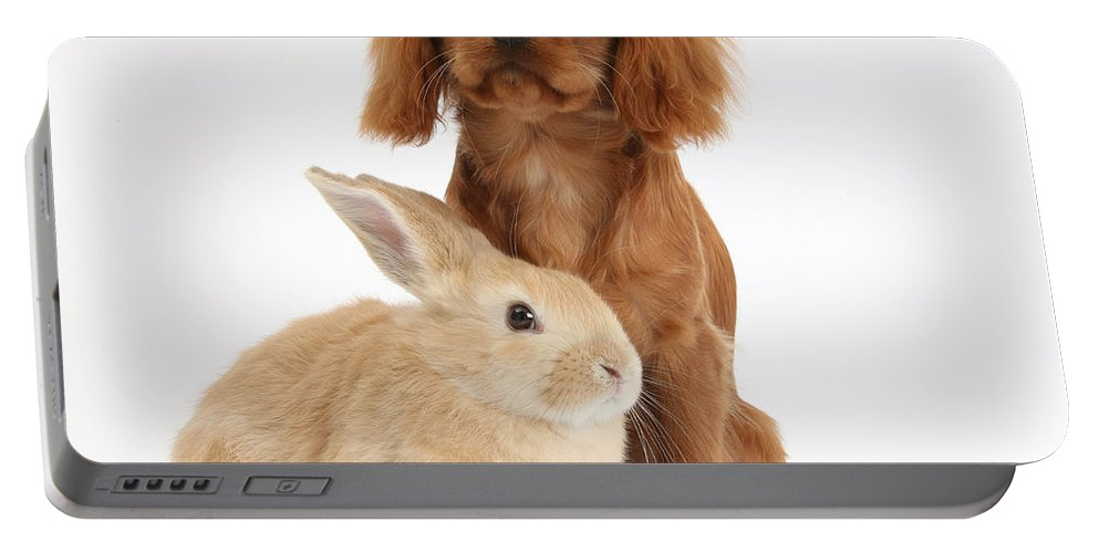 Nature Portable Battery Charger featuring the photograph Ruby Cavalier King Charles Spaniel Pup by Mark Taylor