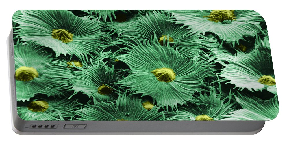 Science Portable Battery Charger featuring the photograph Russian Silverberry Leaf by Asa Thoresen and Photo Researchers