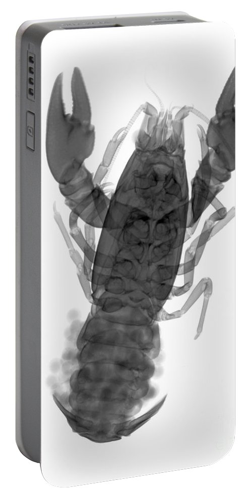 Xray Portable Battery Charger featuring the photograph Rusty Crayfish by Ted Kinsman