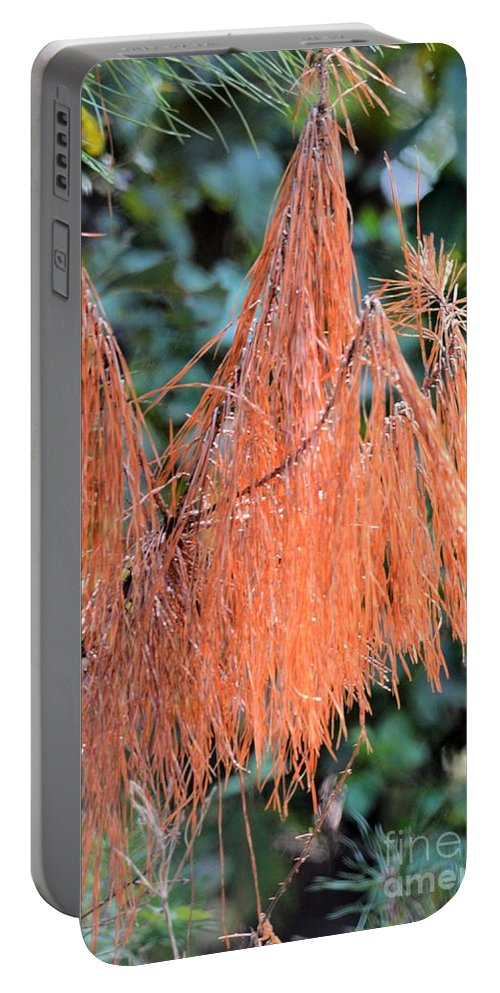 Rusty Needles Portable Battery Charger featuring the photograph Rusty Needles by Maria Urso